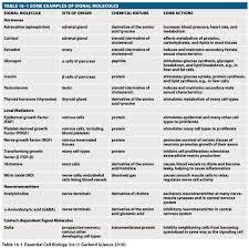 Neurotransmitter Chart 77 True To Life Neurotransmitter Chart Function