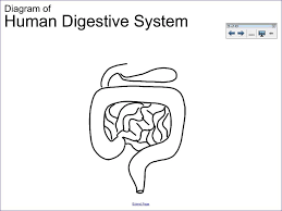 28 collection of digestive system of human body drawing high digestive system draw with pencil pictures