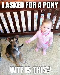 A hilarous meme... But seriously, what breed of dog is this ... via Relatably.com