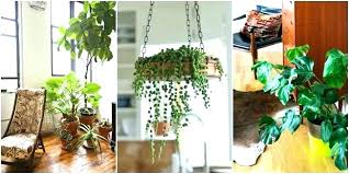 best low light office plants. Indoor Hanging Plant Low Light Good Plants House For Your Office . Best