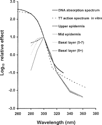 Action Spectrum The Similarity Of Action Spectra For Thymine Dimers In Human