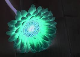 beautiful of artificial sunlight lamp for plants