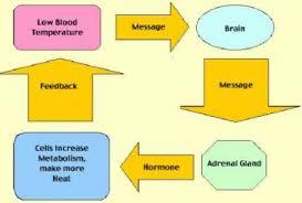 meyer snow plow parts diagram wiring diagram for car engine homeostasis positive feedback loop diagram