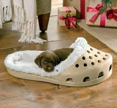 Cool dog bed in shape of a shoe