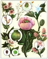 Лекарственные растения 1640 2 jpg