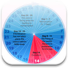Period Cycle Pregnancy Chart Pin On In Fertility