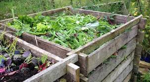 compost garden. Plain Compost Pea Shells In The Compost Bin And Compost Garden S