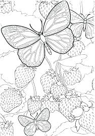 Free Printable Butterfly Coloring Pages Adults B Is For Butterfly