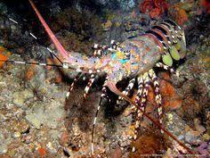Лучших изображений доски «Underwater friends»: 13 ...