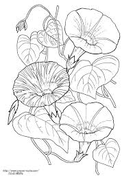 3種の朝顔の植物画の塗り絵の下絵画像 шаблоны 塗り絵ぬり絵画
