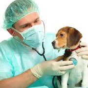Universities That Offer Veterinary Public Health and Preventive Medicine In Nigeria