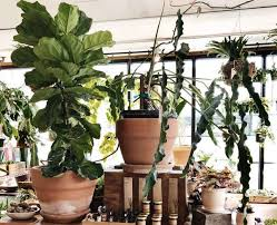 creative pot and planter placement