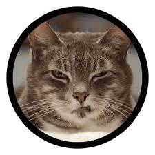 Набор стикеров для Телеграм «Смешные котики»