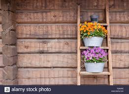 Blumen Auf Leiter Regal Lean Holz Wand Außerhalb Stockfoto