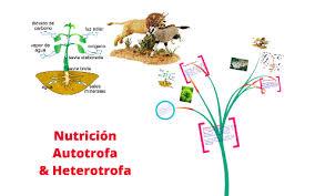 Nutricion autotrofa y heterotrofa by gissel ivonne cazares arenas