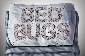 discovering a bug in your house is an unpleasant experience discovering an insect has been tucked into bed with you all night