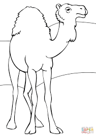 Small Picture Dromedary coloring page Free Printable Coloring Pages