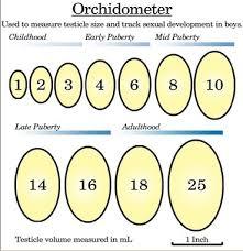 Renal Mass Kidney Cyst Size Chart Bedowntowndaytona Com