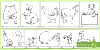 Colours worksheets and online activities. Free Pets Colouring Sheets Teacher Made