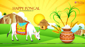 pongal background images