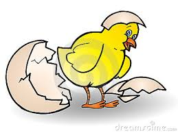 chicken hatching clipart. Contemporary Hatching Inside Chicken Hatching Clipart I