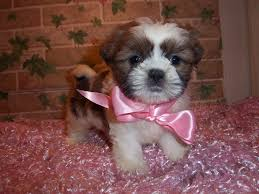small mixed breed puppies for a adoption south paris maine mainely puppies