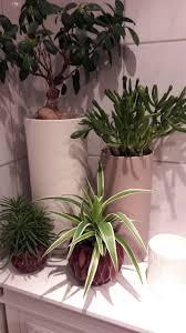 Badezimmer Pflanzen Couch