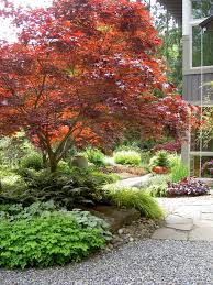 Small Picture Cool Coral Japanese Maple method Seattle Traditional Landscape