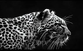 black cheetah wallpaper