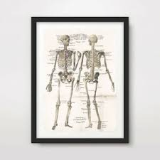 Human Skeleton Wall Chart Details About Antique Human Skeleton Chart Art Print Poster Decor Wall Chart Illustration
