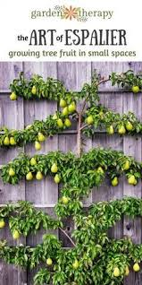 How To Graph A Fruit Tree