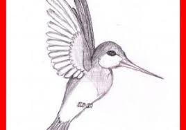 simple hummingbird drawing. Exellent Drawing Simple Hummingbird Drawing Astonishing Stepat  Getdrawings For Of And