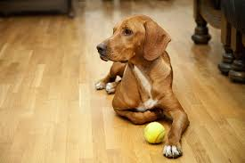 dog on wood floor