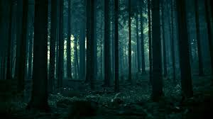 Forest background Download free cool High Resolution wallpapers