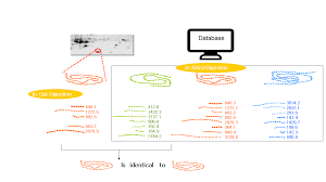 Mass Spectrometry-related Techniques Creative Proteomics Protein Blog Identification – For