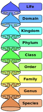 Five Kingdom Classification Kingdoms Features Examples