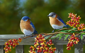 Image result for birds pictures