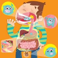 Resultado de imagen de aparato digestivo para niños
