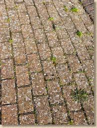 dealing with lichens pavingexpert