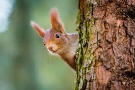 Bildergebnis für mühsam ernährt sich das eichhörnchen