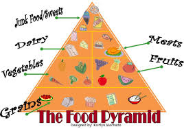 Food Pyramid Project Term 4 Kaitlyns Graphics Website