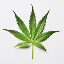 medical marijuana here s what science says about whether it works  medical marijuana here s what science says about whether it works time