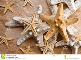 how to write an essay introduction for essay on starfish the asteroid more commonly known as the starfish or sea star is an invertebrate that lives mainly in an oceanic environment by accident one had a spinal