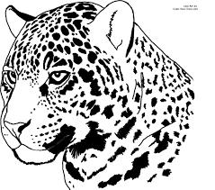Jaguar Coloring Pages To Print Fresh Outline Free Printable Kids