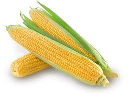Maïs doux : Géant Vert, notre maïs en conserve