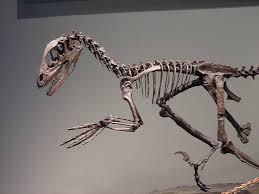 نتيجة بحث الصور عن أسباب انقراض الديناصورات