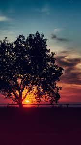 Sunset Scenery Tree Landscape Nature 8K ...