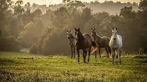 Wild Horse Desktop Wallpapers ...