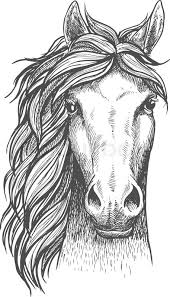 horse face drawing front. Beautiful Face Beautiful Arabian Stallion Sketch Icon For Horse Breeding Symbol  Equestrian Or Riding Club Emblem Design Front View Of A Head Purebred With  Intended Horse Face Drawing R