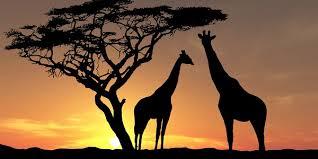 afrika ile ilgili görsel sonucu
